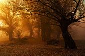 深野生森林景觀照片美麗的秋色