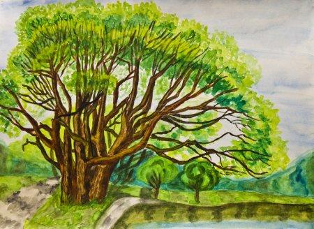 手绘图片,水彩画-夏天风景与杨柳树在公园