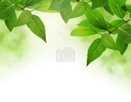 Green leaves border with copy space